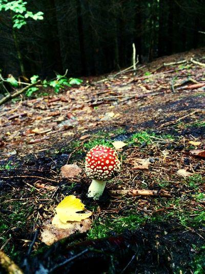 Mushroom Growth