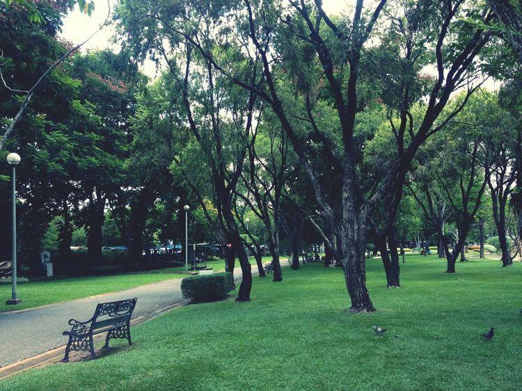 Park Time