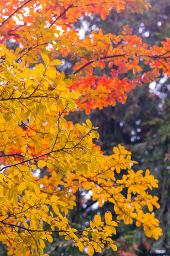seasons and colors Plant Beauty In Nature Yellow Growth Tree Freshness Flowering Plant Focus On Foreground Day Close-up Branch Autumn Change Fragility Nature Vulnerability  No People Outdoors Selective Focus Natural Condition