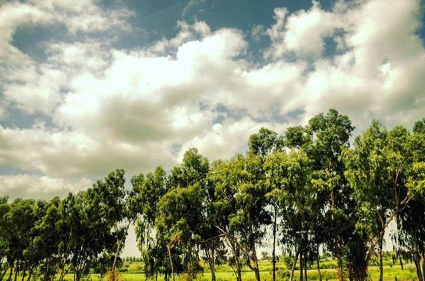 I am free like a spirit..... Either admire me from the ground. OR Fly with me..... But dont ever try cage me.... BeautyOfPakistan Pakistan Paki Nature Naturelover Beauty Travelers Tourism Beautyfulpakistan Travelpakiatan Ig_pakistan Clouds Trees Islamabad Isbhighway ISB Igrspakistan Im_pakistan Instameetpakistan Discovringpakistan Wheninpakistan WonderfulPakistan Vascopakistan Shutterpak Picturepakistan ig_pakistanigrspakistanvascopakistan northenpakistan instanature picofthedaynofilteramazingartofearth