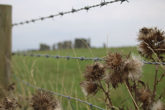 England, UK Fence Field Focus On Foreground Grass Landscape Nature Old Ruins Scenics Sky Stone - Object Stonehenge Stonehenge And Sky Thistle Tourist Attractions Tranquil Scene Tranquility Uncultivated Focus Object