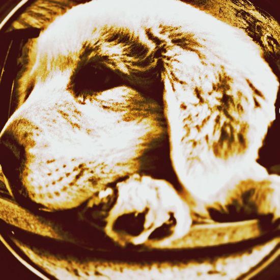 Dog Fisheye