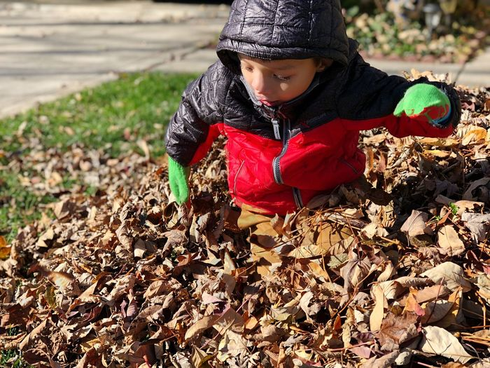 Boy plays in a pile of leafs Mixed Race Asian  Pile Of Leaves Leafs Leaf Child Childhood One Person Real People Front View Field Land Day Innocence Nature Boys Full Length Cute Leisure Activity Casual Clothing Growth Looking Outdoors Warm Clothing
