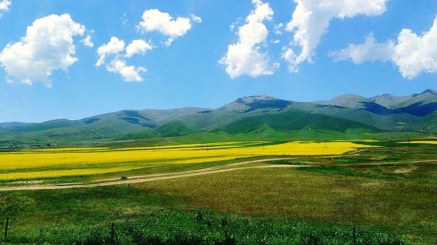 油菜花开,花开满地。 Mountain Nature