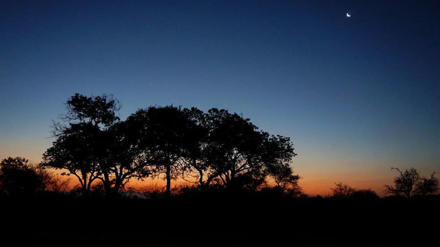 Tree Sunset Nature No People Sky Moon Beauty In Nature African Nature Africa Sunset_collection Sunsetlovers Sunsetphotography Sunset Photography Wild Nature Kruger National Park, South Africa