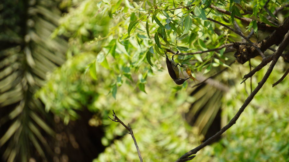 A cute search engine Nature Tree Growth Outdoors Green Color Close-up Forest Beauty In Nature Branch No People Day Needle - Plant Part Spider Web Sony A6000 Beauty In Nature Nwin Photography Animal Wildlife SonyAlpha6000 Nature Bird Birds Of EyeEm  Neem Tree