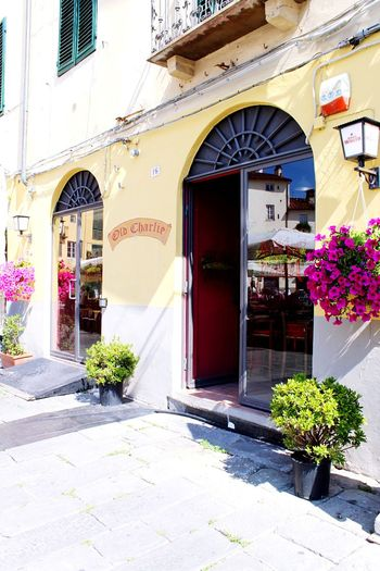 Lucca Italy Lucca Italy Architecture_collection Architecture Built Structure Plant Building Building Exterior Entrance Flowering Plant Door Flower Nature No People Sunlight Day Potted Plant Growth Arch Outdoors