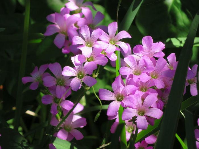 Spring flowers Flower Head Flower Pink Color Petal Purple Close-up Plant Botany