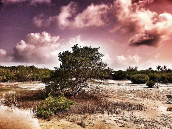 Nature Photography Enjoying The Sun Sand Dunes