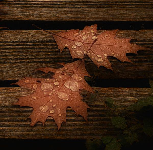 Autumn Autumn Leaves Fall Beauty Fall Leaves Fallen Leaves Leaf Nature Raindrops Seasons Waterdrops Showcase: November