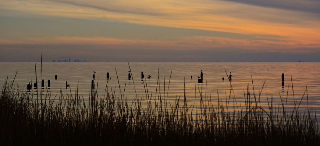 New Orleans from Big Branch Marsh NWR, La. Sunset Scenics Beauty In Nature Tranquility Silhouette Water Tranquil Scene Nature Grass