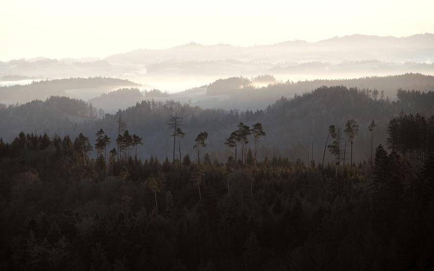 Hills Morning Morning Light Environment Fog Hill Idyllic Landscape Outdoors Plant Scenics - Nature Tree