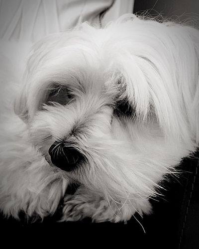 Dog Sweet Love White Black And White Relaxing Reflection Creative Fidelity  Young