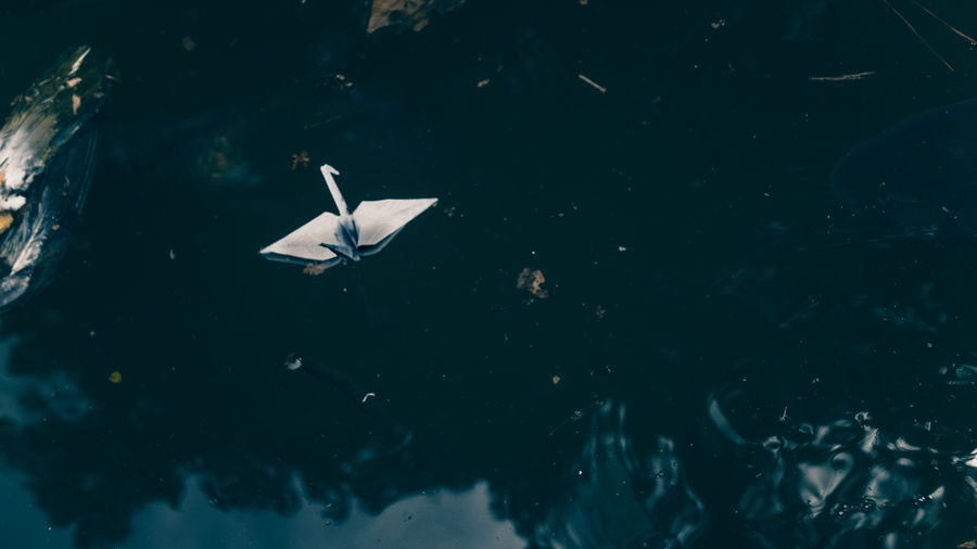 Animal Wildlife Animals In The Wild Bird High Angle View Japan Japan Photography No People Origami Paper Crane Water Waterfront