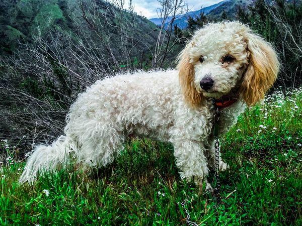 Buddy Dog Pets Domestic Animals One Animal Animal Themes Mammal Grass