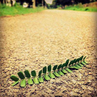 Loneliness Leaf ODF Iith Focus