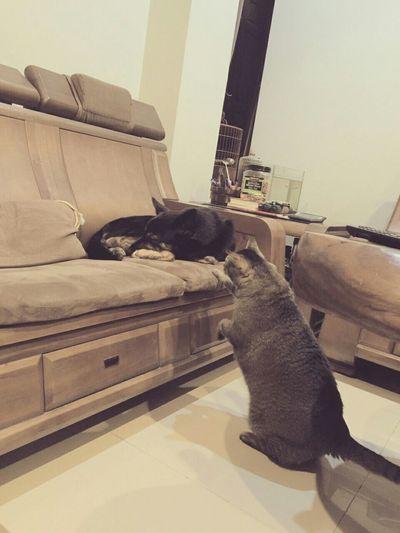 Cat+dog Petphotography Cat