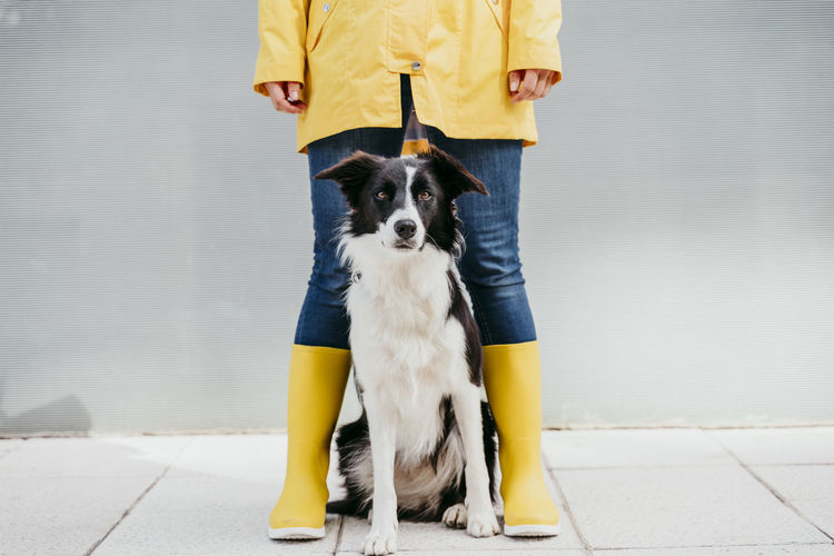 Low section of person with dog standing on footpath