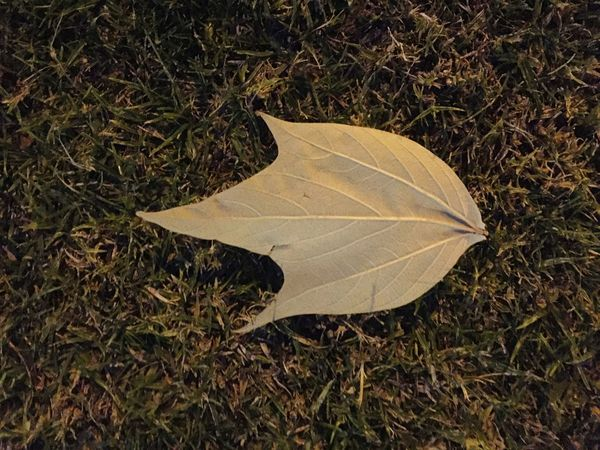 Leaf Nature High Angle View No People Outdoors Close-up Tranquility Day Grass EyeEmNewHere