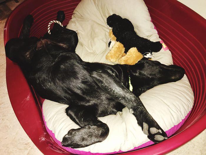 Dog Sleeping Dog Nice Dreams Dog❤ Dog