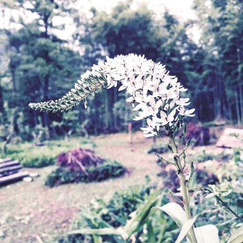Flower Nature IPhoneography Enjoying Life Countryside Japan 自然 里山 田舎暮らし