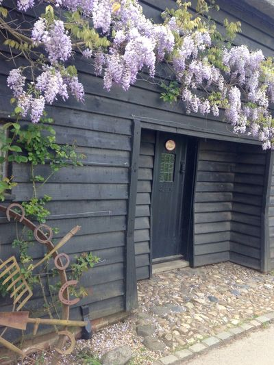 The Essence Of Summer wisteria in full bloom Old Granary Taking Photos Enjoying Life Check This Out Pure No Filters Outdoors Beauty In Nature Nature's Diversities - 2016 EyeEm Awards Nature_collection Flowers, Nature And Beauty