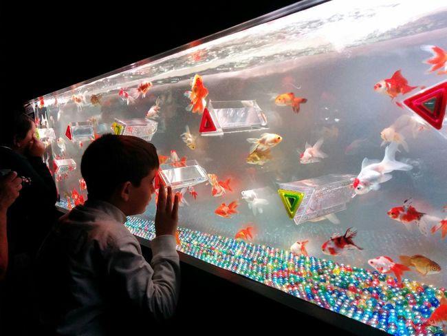 Art Aquarium2015 Kingyo Prismatic Glass Art