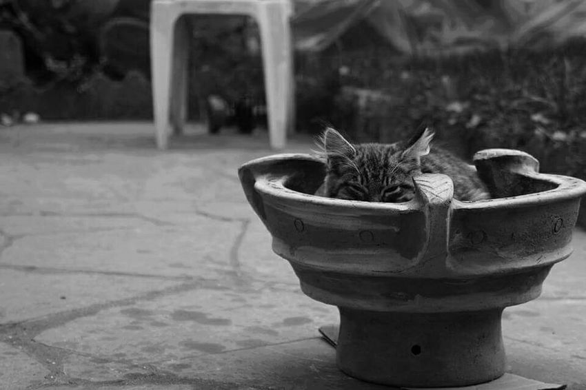 Cats Spy Cat Is Spying Animal Love Black & White Animal Photography In My Garden