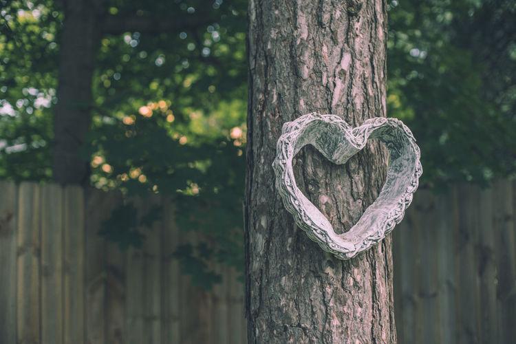Heart shape on tree trunk