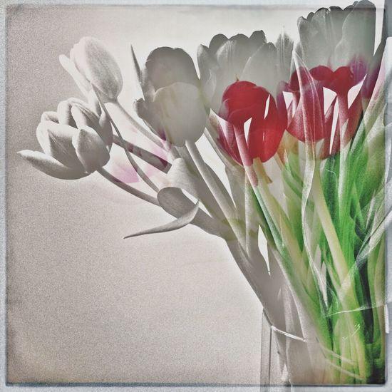 Valentine Still Life Valentine Flowers Bouquet