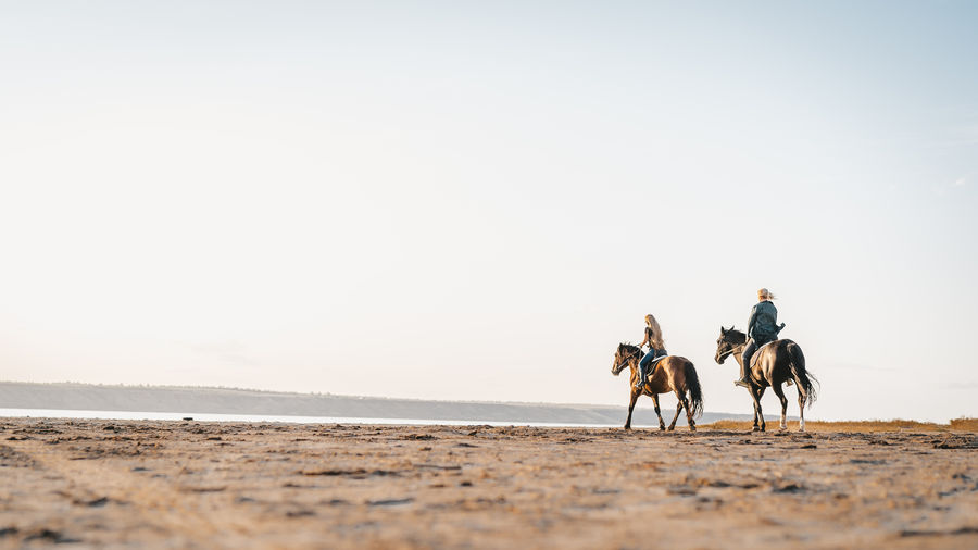 People horseback riding at beach against clear sky