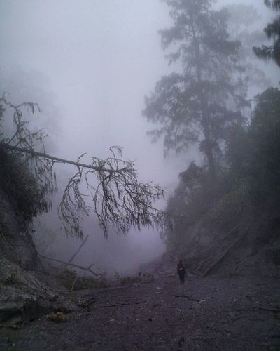 Adem... ❄ . . Kabut tebal di Kalimati Gunungsemeru Jawatimur . . . 2007. Pocketcamera Fog Nature Instanature Travel Travelgram Adventure Camping Treking Mountains Trees Sands Instamood