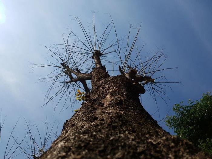 Nature Bark Dry