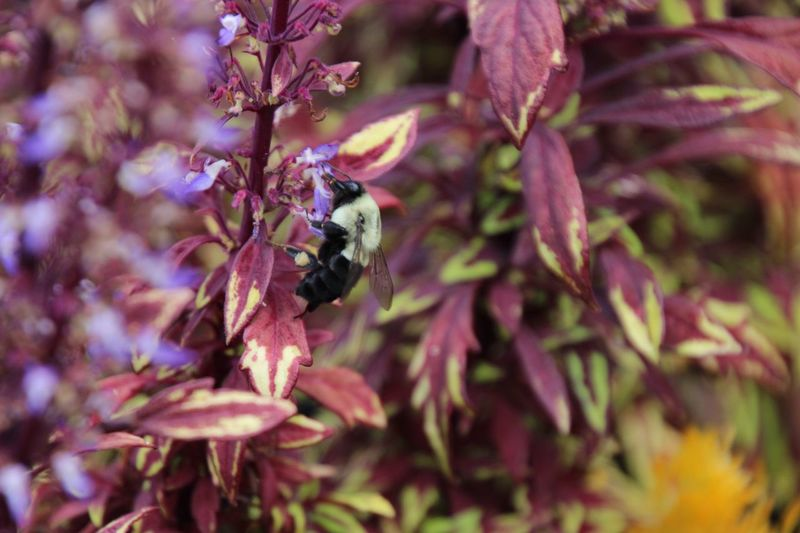 Outdoors Beauty In Nature Flower Insect Bee Pollination Close-up No People