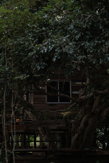 Abandoned Architecture Belief Branch Building Building Exterior Built Structure Day Forest Growth House Land Nature No People Outdoors Place Of Worship Plant Religion Shrine Tree