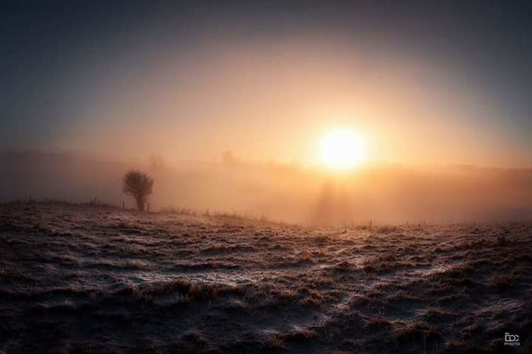 Eidsvoll Norway Sun Sunset Fog Sunbeam Landscape Sunlight Nature Beauty In Nature Scenics Outdoors Field Tranquility No People Dawn Winter Tree Day Sky
