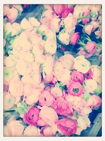 i always found rose is so romantic♥