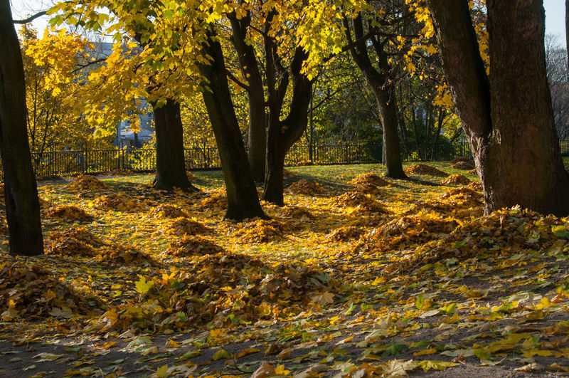 Colorful Leaves Autumn Beauty In Nature Day Forest Leaf Nature Sunlight Tree Tree Trunk Yellow EyeEmNewHere