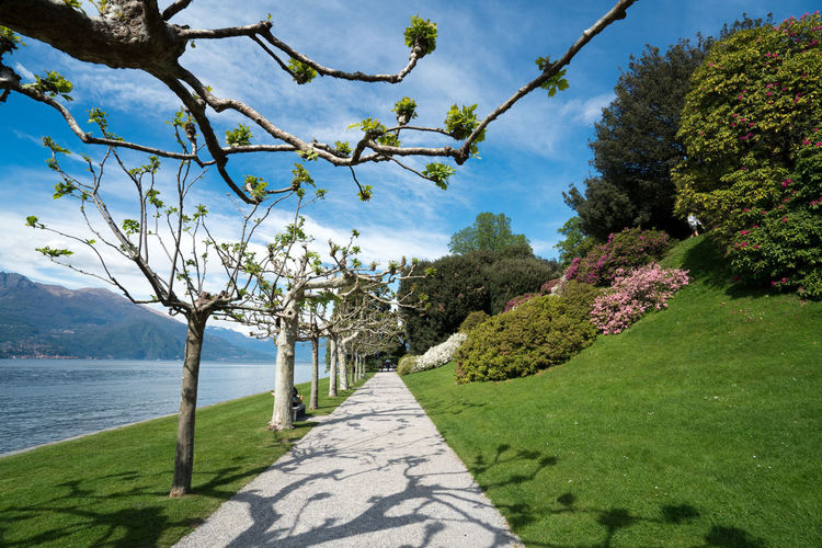 Landscapes view from gardens in Bellagio on Como Lake, Italy Blue Cielo Fiori Giardini Giardino Italia Italy Lombardy Lombardia Lake Of Como Lago Di Como Comolake Lake Como Como Lake Como Varenna Tremezzo Menaggio Bellagio Cherry Blossom Springtime Mountain Landscape Outdoors Sunlight Tranquility Flowering Plant Day Scenics - Nature Tranquil Scene Growth No People Grass Flower Nature Water Beauty In Nature Sky Tree Plant Green Color Land Villa Melzi