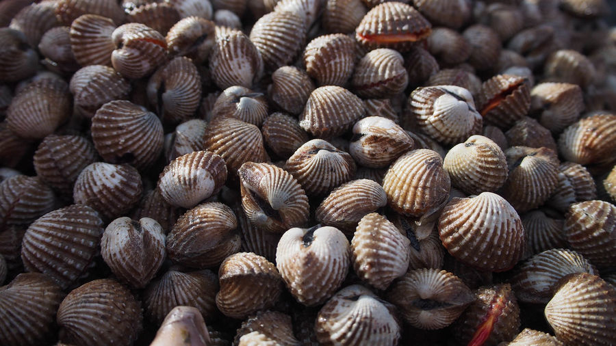 Shell Animal Themes Backgrounds Beauty In Nature Close-up Day Freshness Full Frame Large Group Of Animals Large Group Of Objects Nature No People Outdoors Raw Food Seashell