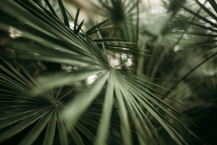 Green palm leaves with bokeh photo effect. high quality photo