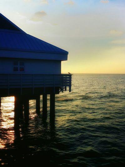 Sunshine Relaxing Being A Beach Bum Sea Nature Florida Life Clearwaterbeach Beach Pier60 Outdoors