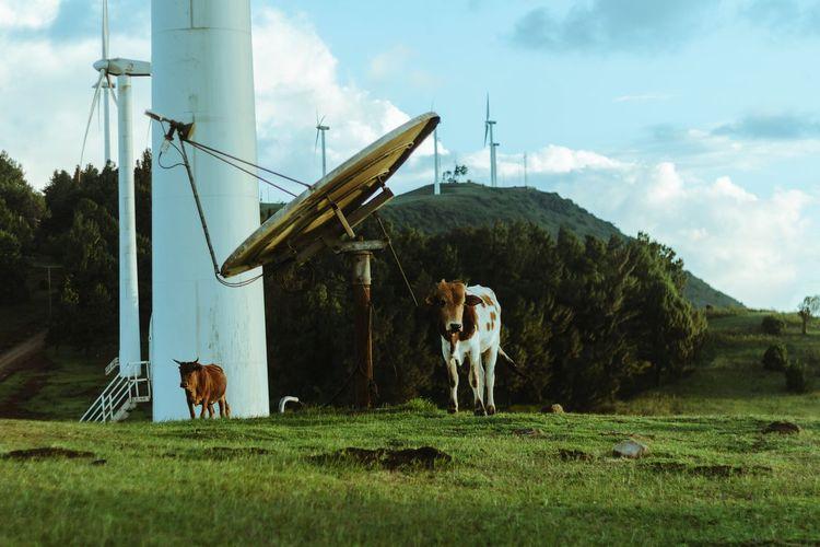 Reasontoroam Artofvisuals Bleachfilm EyeEm Windmill First Eyeem Photo