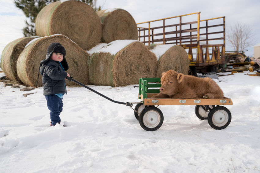 Children Farm Life Farm Living Wagon  Animal Themes Child With Animal Children Playing Cold Temperature Day Domestic Animals Livestock One Animal One Person Pets Real People Snow Toddler  Warm Clothing Winter