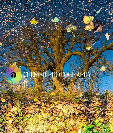 Reflections autumn leaves in puddle Cherishphotography.com