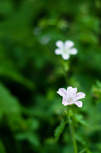 Beauty In Nature Blooming Close-up Day Flower Flower Collection Flower Head Flowers Focus On Foreground Fragility Freshness Green Color Growth Leaf Nature No People Outdoors Petal Plant White Color