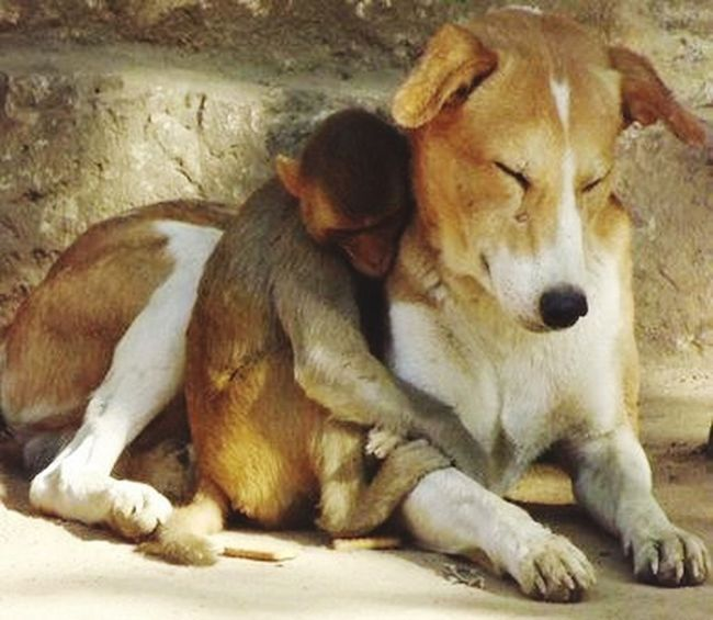 Friendship Taking Photos Hello World Monkey Love Monkey Monkeylove Dog Love Dog Dog❤ Dog Sleeping  Dogsitting DogLove Doglover Dog Lover Friends Friendship. ♡   Friendsforever DostiandFriendship Love Love Is In The Air Enjoying Life Hanging Out Animals Animal Photography Animal Love