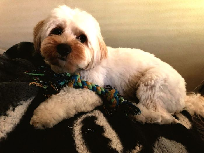 Portrait of cute puppy relaxing on blanket