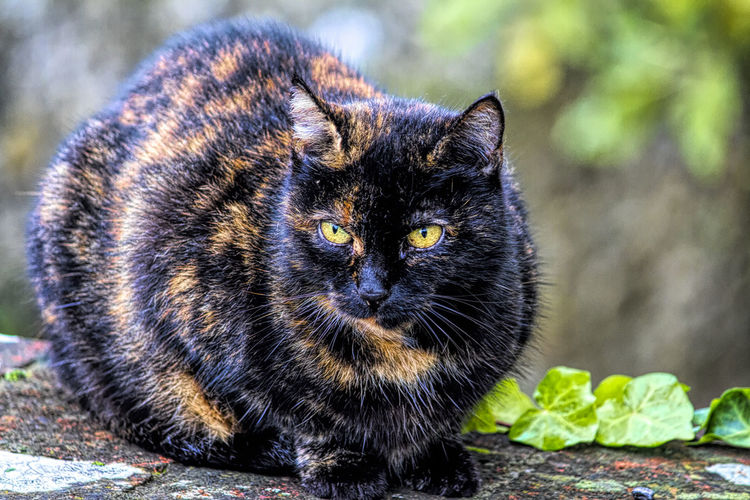 Cats Outdoors Outdoor Photography Animal Themes Colors Eyes Portrait Portrait Photography