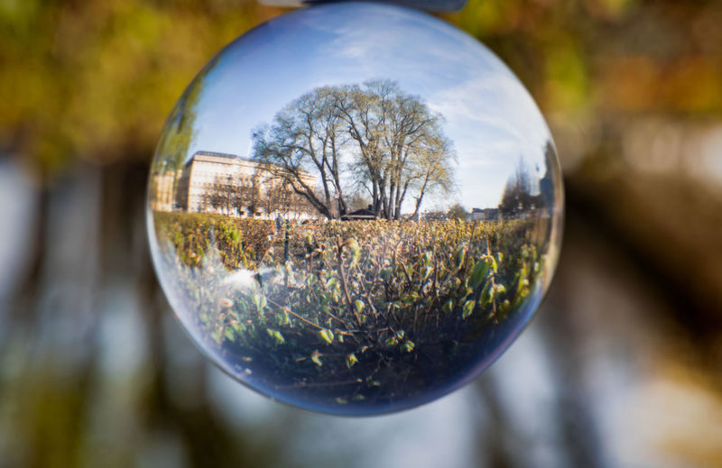 tree through crystal ball Sphere Glass - Material Transparent Outdoors Focus On Foreground Nature Plant Close-up Crystal Ball Reflection Tree Shape No People Ball Geometric Shape Day Selective Focus Circle Glass Shiny Silver Colored Spring